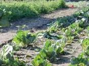 Mozambico primis attenzione all'agricoltura