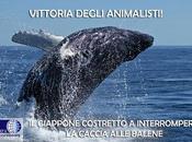 Giappone costretto interrompere caccia alle balene... finalmente!