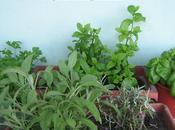 Consigli salvacucina…le erbe aromatiche spezie cucina