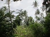 L´Isola delle spezie_Zanzibar