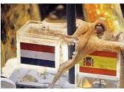 Polpo Paul Robj: dico Olanda!
