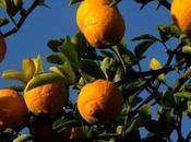 Essenziali Arancio Amaro