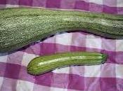 Zucchine zuccone