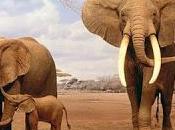 Massacro Elefanti, esemplari uccisi