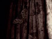 stasera cinema terrore Madre divertimento Croods