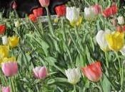 Giornata mondiale della poesia 2013: primavera celebra dolci versi