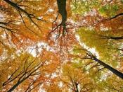 Giornate delle foreste, polmoni della Terra