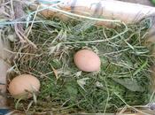 Pasqua Pasquetta Tredozio Sagra Paolio dell'Uovo