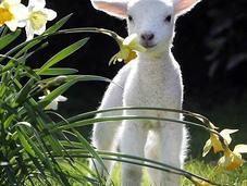 Motivi trascorrere Buona Pasqua!