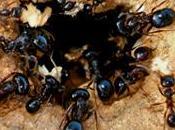 rete? formica!