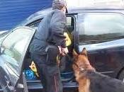 Operazione antidroga Piacenza manette anche agenti della narcotici