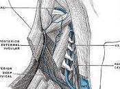 Sclerosi Multipla: clinica della CCSVI (Dr. Fabrizio Salvi, neurologo)