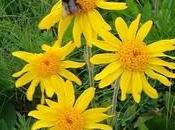 Traumi ematomi: Arnica, Ruta Hypericum perforatum differenze.