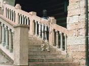 Bolin mimetizzato Verona
