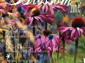 Blossom zine: first issue online!