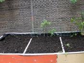 Orti balcone: come costruire tavolo orto fai-da-te