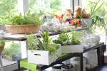 Cucinare erbe aromatiche