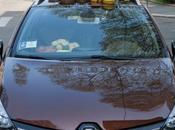 Renault clio sporter: flower side