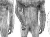 Bigfoot: primi avvistamenti lontano 1811, oggi quali sono novità?