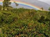 Boquete: cuore verde Panama