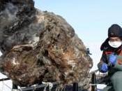 Scoperto sangue Mammut: possibile clonazione come Jurassic Park?