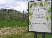 Verdicchio Matelica DOC, ColleStefano 2011