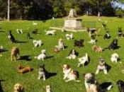 parco vietato bambini. Perché disturbano cani