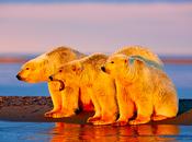 comunicazione cambiamenti climatici attraverso immagini-tipo. Perché 'funzionano' orsi polari?