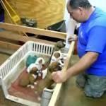 Canta ninna nanna cinque cuccioli addormentano (video)