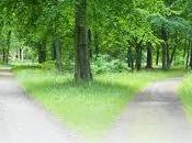 Robert Frost strade bosco