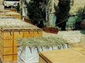 """""""Solar Succa"""" Israele all'avanguardia nell'energia solare"""
