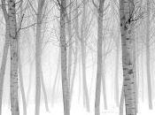Divagazioni alberi selvatici