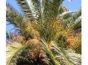 Ucciso ramo palma: Claudio Anastasi Acitrezza (Catania)