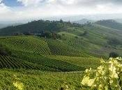 Mango Piemonte Enoteche Regionali