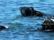 Maddalena Mario Sala muore durante un'immersione