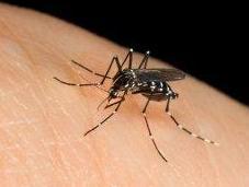 Zanzare: come difendersi rimedi naturali