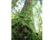 Borneo malese: foreste agli sgoccioli