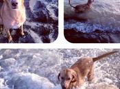concorso fotografico contro l'abbandono cani