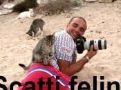 Estate Pallosu: gatto diventa protagonista
