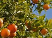 Sindrome stress: come rilassarsi l'arancio dolce