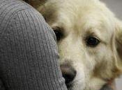 therapy: bimba guarisce grazie cane