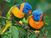 Summer Make Inspiring Tropical Bird