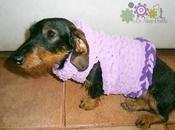 tornano magliOTTI... maglioni bassotti cani piccola taglia...