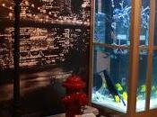 """stasera prende Discovery Channel (sky 401,402 HD) ogni venerdì """"Acquari Famiglia"""", autentiche opere d'arte accolgono pesci straordinari"""