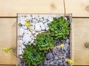 Bomboniere piante grasse: bomboniere utili, trendy eco-chic!