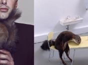 L'ossessione dello scoiattolo nell'arte conmporanea