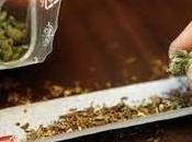 Nicandro Garganico Tonnellate cannabis Arrestati foggiani