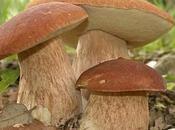 Come puliscono funghi