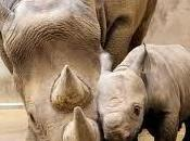 Domani World Rhino Day, tristezza