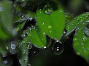 Odore pioggia, profumo d'autunno